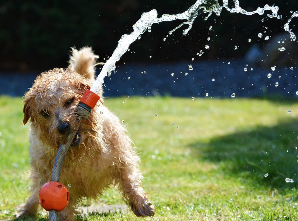 how to keep your pets healthy in summer