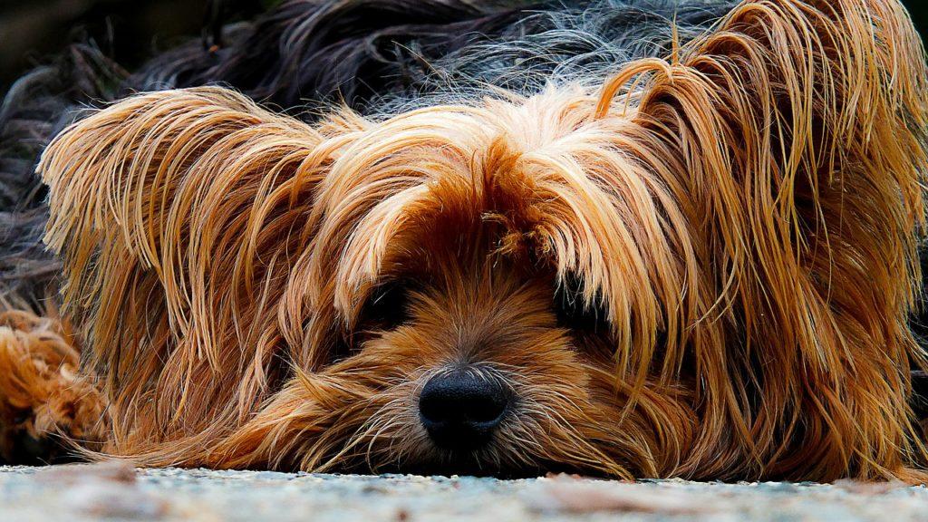 keep pets healthy in summer