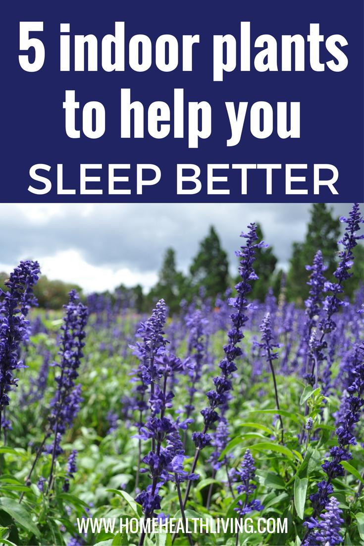 5 best indoor plants to help you sleep better