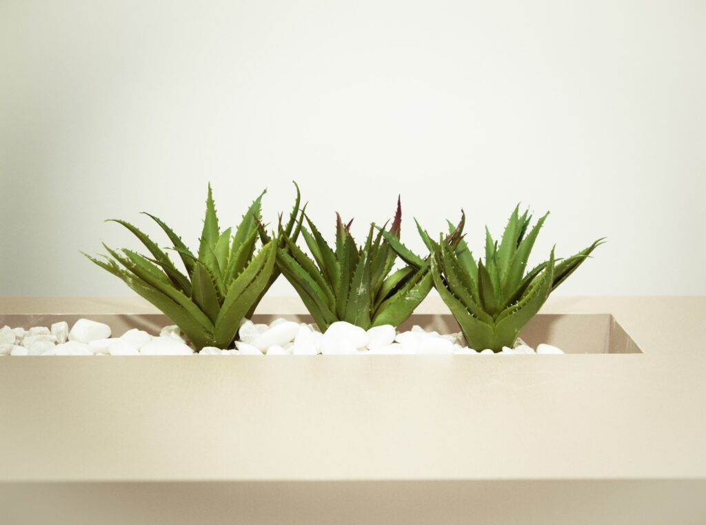 Aloe vera bathroom plants that absorb moisture