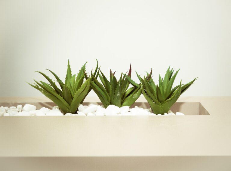 Aloe vera bathroom plants that absorb moisture