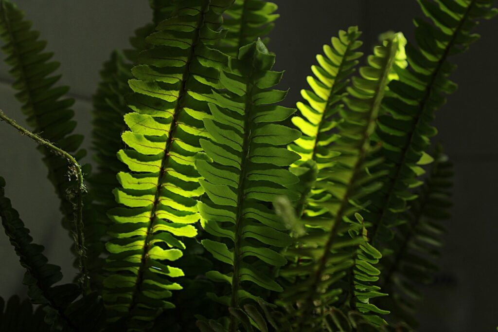 boston fern bathroom plants that absorb moisture dehumidify