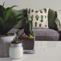 indoor plants sofa