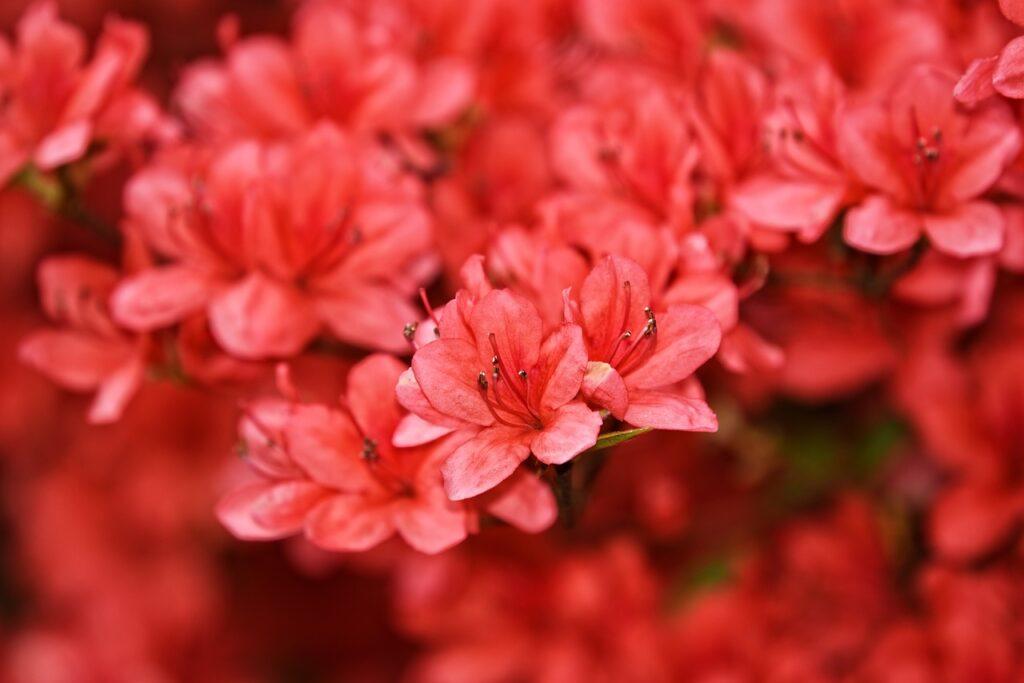 plants that absorb humidity azalea